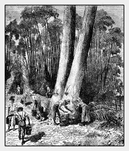 88594971-illustration-du-xixème-siècle-de-la-récolte-de-latex-à-partir-de-l-hévéa-au-brésil-pour-la-production-de-caou